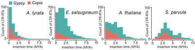 Figure 1. Distribution of insertion times of Copia and Gypsy retro-elements in the four species